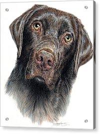 Boomer Acrylic Print by Joanne Stevens
