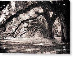 Boone Hall Plantation Live Oaks Acrylic Print