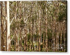 Acrylic Print featuring the photograph Boranup Forest  by Ivy Ho