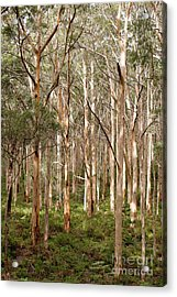 Acrylic Print featuring the photograph Boranup Forest Portrait by Ivy Ho