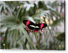 Borboleta Butterfly Acrylic Print