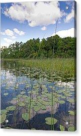 Borden Lake Lily Pads Acrylic Print