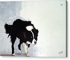 Border Collie Acrylic Print by Dick Larsen