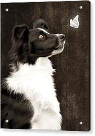Acrylic Print featuring the photograph Border Collie Dog Watching Butterfly by Ethiriel  Photography