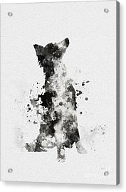 Border Collie Acrylic Print by Rebecca Jenkins