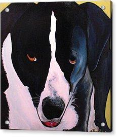 Acrylic Print featuring the painting Border Collie- Sasha by Laura  Grisham