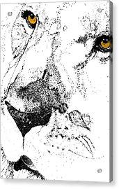 Born Free Art Acrylic Print by JAMART Photography