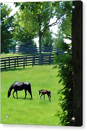 Born In Bluegrass 2 Acrylic Print by Sam Davis Johnson