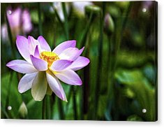 Acrylic Print featuring the photograph Born Of The Water by Edward Kreis