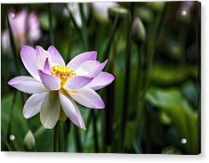 Acrylic Print featuring the photograph Born Of The Water Original by Edward Kreis