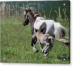 Born To Run Acrylic Print