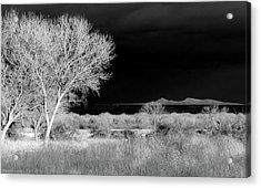 Bosque Del Apache - Infrared Acrylic Print