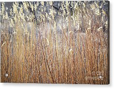 Acrylic Print featuring the photograph Bosque Desert Willows by Andrea Hazel Ihlefeld
