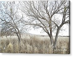 Acrylic Print featuring the photograph Bosque Dreamy Tree Field by Andrea Hazel Ihlefeld