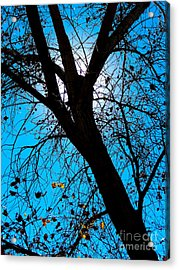 Bosque Silhouette Acrylic Print