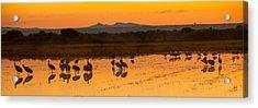 Bosque Sunrise Acrylic Print