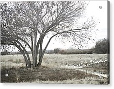 Acrylic Print featuring the photograph Bosque Tree Snow Geese by Andrea Hazel Ihlefeld