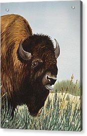 Boss Bull Acrylic Print by Bud Bullivant
