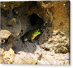 Acrylic Print featuring the photograph Boss Frog by Al Powell Photography USA