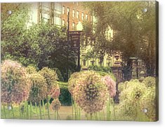 Boston Public Garden In Spring - Alliums Acrylic Print by Joann Vitali