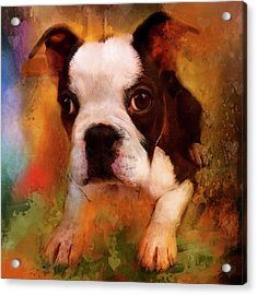 Boston Puppy Acrylic Print