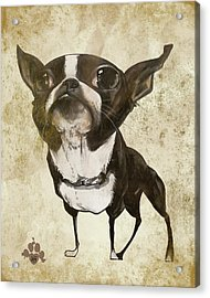 Boston Terrier - Antique Acrylic Print