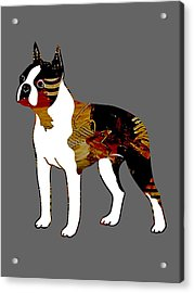 Boston Terrier Collection Acrylic Print by Marvin Blaine