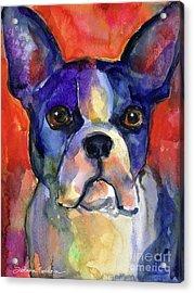 Boston Terrier Dog Painting  Acrylic Print by Svetlana Novikova