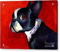 Boston Terrier Dog Portrait 2 Acrylic Print by Svetlana Novikova