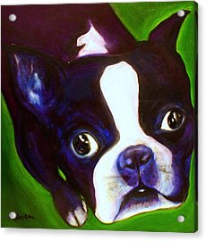 Boston Terrier - Elwood Acrylic Print