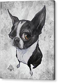 Boston Terrier - Grey Antique Acrylic Print