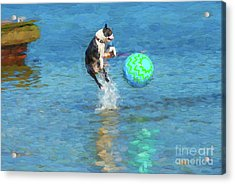 Boston Terrier Jump - Painterly Acrylic Print