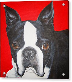 Boston Terrier Acrylic Print by Keran Sunaski Gilmore