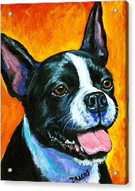 Boston Terrier On Orange Acrylic Print by Dottie Dracos