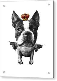 Boston Terrier, The King Acrylic Print by Madame Memento