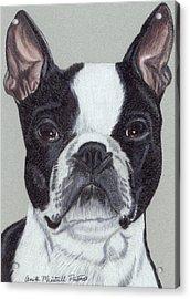 Boston Terrier Vignette Acrylic Print