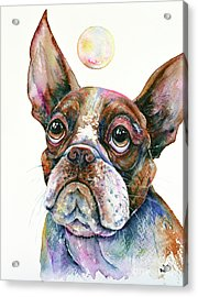 Acrylic Print featuring the painting Boston Terrier Watching A Soap Bubble by Zaira Dzhaubaeva