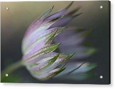 Botanica ... Flight Acrylic Print