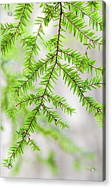 Acrylic Print featuring the photograph Botanical Abstract by Christina Rollo