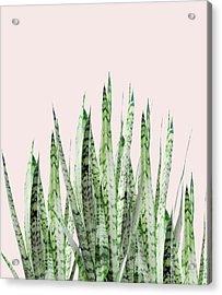 Botanical Balance Acrylic Print by Uma Gokhale