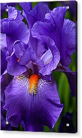 Botanical Beauty In Purple Acrylic Print by Toma Caul