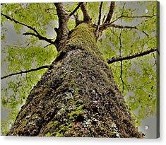 Botanical Behemoth Acrylic Print
