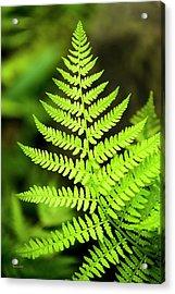 Botanical Fern Acrylic Print