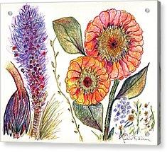 Botanical Flower-49 Acrylic Print by Julie Richman