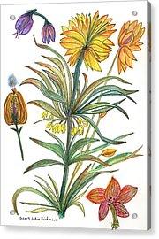 Botanical Flower-53  Yellow Flower Acrylic Print by Julie Richman