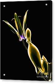 Botanical Study 1 Acrylic Print by Brian Drake - Printscapes