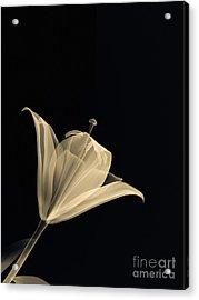 Botanical Study 3 Acrylic Print by Brian Drake - Printscapes