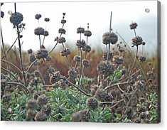 Botanical Towers Acrylic Print by Jean Booth