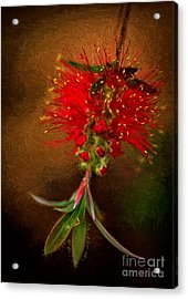 Bottle Brush Flower Acrylic Print