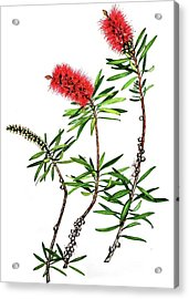 Acrylic Print featuring the painting Bottle Brush by Heidi Kriel
